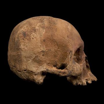 ChocolateSkull